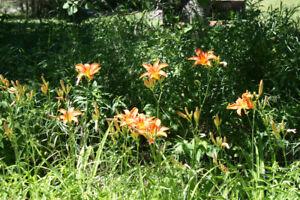 Herbs, Perennials , Vegetables -  Raised outdoors