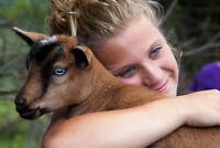 Goat Shmurgle at Haute Goat