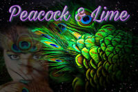 Attention: Peacock and Lime is looking for team mates!!