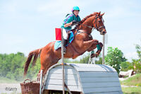 Horse for part board TB gelding