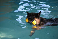 Swimming for your dog!!