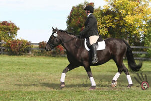 Beautiful mare available for lease Windsor Region Ontario image 3