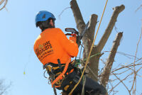 Tree Removal, Tree Care,  Call for FREE Estimate: 416 745 8733