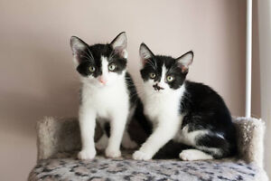 Cats and Kittens for Adoption!