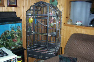 birds and cages for sale