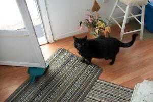 animaux perdus trouvés granby sherbrooke