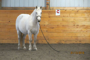 Horse Boarding at Coal Lake Stables Edmonton Edmonton Area image 1
