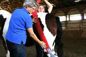 Equine First Aid Courses Winter/Spring.