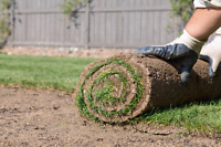 Anyone looking for sod done?
