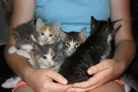 Free - Kittens to Give Away to Good Homes