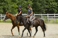 Riding Courses and Lessons