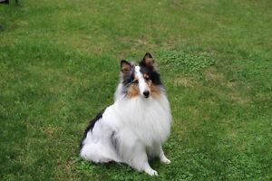 Dog Training Classes  NEW DATES !!