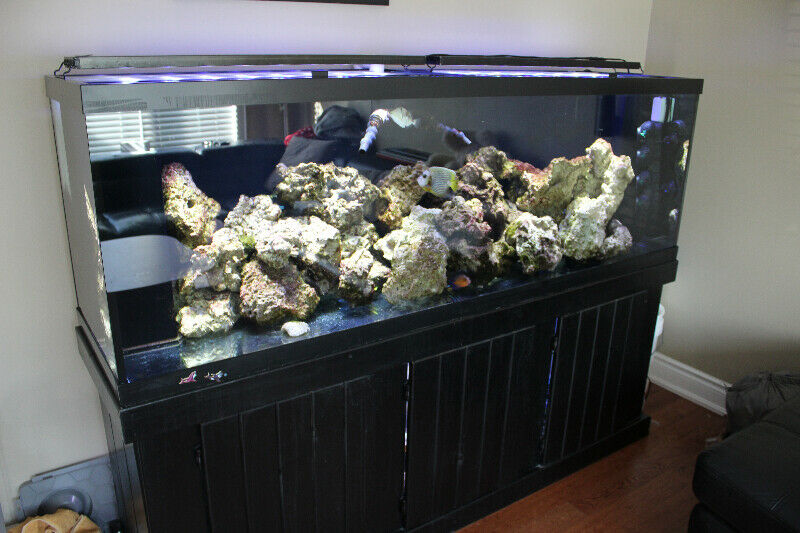 Saltwater fish tank 155-gallon | Fish for Rehoming ...