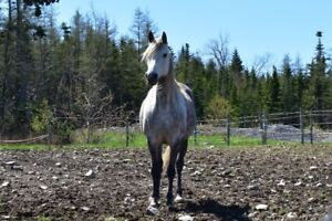 10 Year Old Pretty Mare For Sale