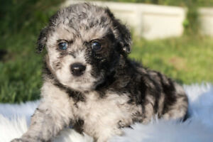 Adopt or Rehome Pets in Nanaimo   Pets   Kijiji Classifieds