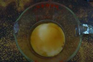Organic Kombucha Scoby and starter tea
