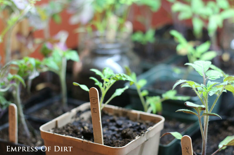 Save money with indoor and outdoor seed starting