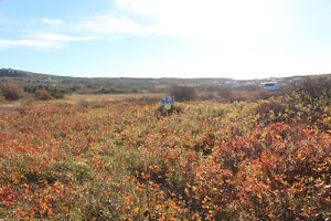 Land For Sale in Old Perlican, Trinity Bay! $9,900