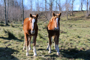 Well-matched weanlings
