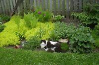 Landscaper/Gardener available
