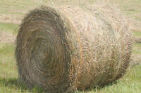 Looking for round bales of hay