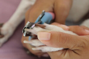 Nail Trims! Dogs, cats, bunnies, ferrets and more.