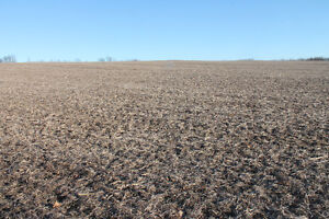 CORN / SOYBEAN LAND, CASH CROP - APPROX 215 RURAL ACRES!