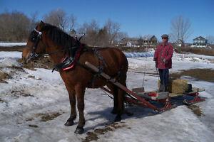 Attelage pour chevaux