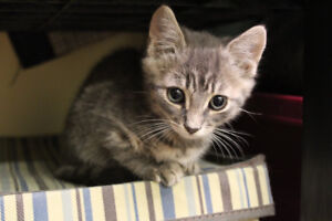 Available for Adoption
