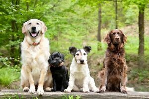 Doggy Daycare Cage-free Join our Active, Fun Loving Pack