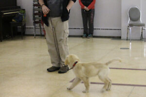 Puppy Class starting Thursday April 26th at 5:45pm & 7:00pm!