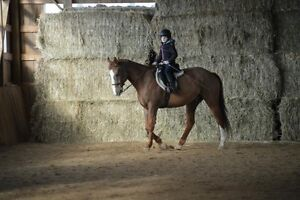 Wanted Co-boarder - Horse Cambridge Kitchener Area image 1