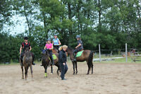 Full Time PAID working student position on horse farm
