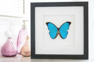 interior design butterfly