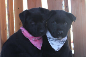 Beautiful Puppies/update ,only white bandana girl available