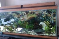 55 gallon fish tank with lights and stand