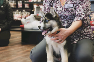 FREE Puppy Social @ Pet Valu Cole Harbour October 5th