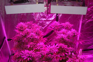 Pro Grow™ 300 Watt LED Grow Light - Veg/Bloom - Hydroponics