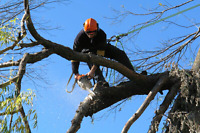 Tree Trimming, Pruning, Removals - Expert Tree Care
