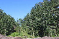 Beautiful Lot, Trees, Close to Park, Pond & Walking Trails!
