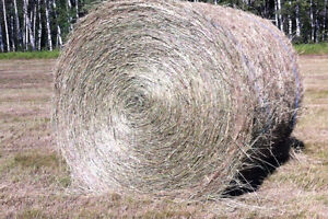 HAY for sale 1400 lb no rain put up mid august