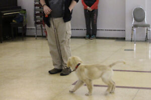 PUPPY CLASS - starting on Monday January 8th in Belleville
