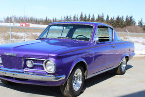 First Year Barracuda - Don't Miss Your Chance To Own It!