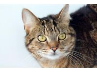 RESCUE CAT: Beautiful Tabby Lily