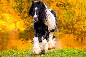 PHOTOGRAPHE ANIMALIER agencetourdumonde.com