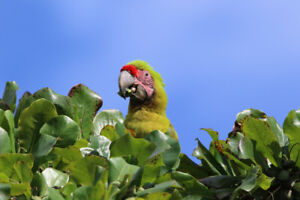 Hamilton Parrot Club, Monday, February 25 Meeting