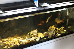 60 gallon tank W tropical fish & all the supplies you will need