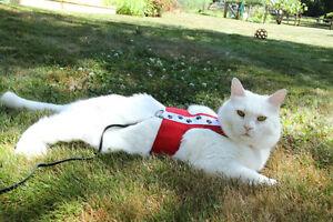 Custom Cat Harnesses!! Edmonton Edmonton Area image 7