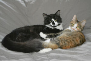2 young cats, brother and sister to good home Shediac area