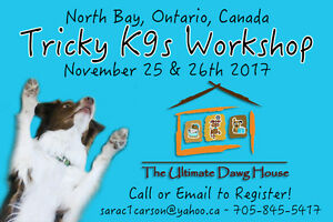 Tricky K9s with Sara Carson and The Super Collies!